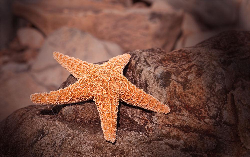 尋找海底世界